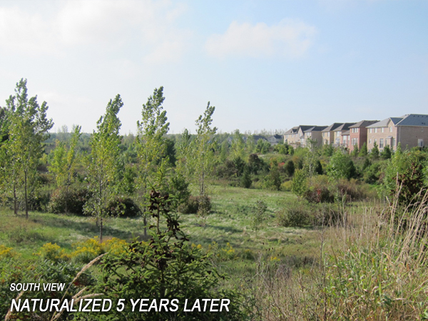 Bronte Creek - Naturalized Area 5 years later