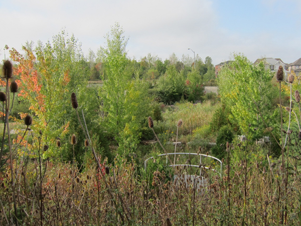 Bronte Creek Phase 2 Valley Naturalization overview 2