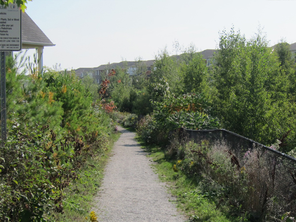 Bronte Creek Phase 2 Valley Naturalization path 2