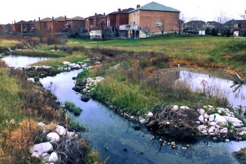 Rupert's Pond